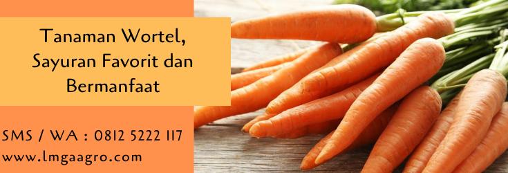 tanaman wortel,wortel,budidaya wortel,benih wortel,cara menanam wortel,lmga agro