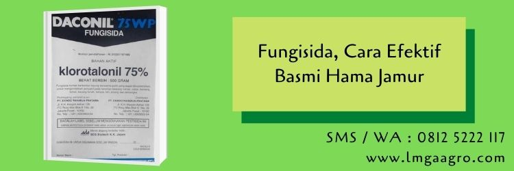fungisida,pestisida,hama tanaman,jamur,budidaya tanaman,pertanian.lmga agro