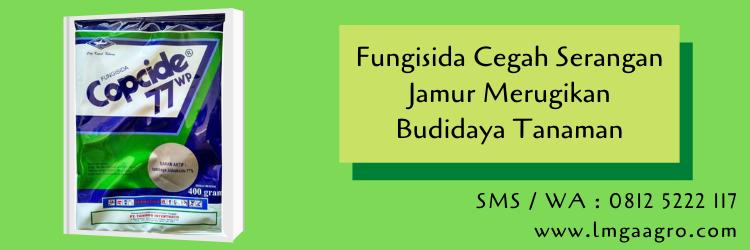 fungisida,jamur,hama tanaman,budidaya tanaman,pertanian,petani,lmga agro