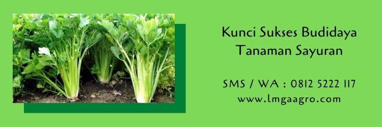 kunci sukses,budidaya tanaman,budidaya tanaman sayuran,benih tanaman,sayuran,pemupukan,benih tanaman,pertanian,lmga agro