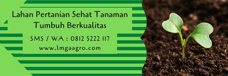 Lahan Pertanian Sehat Tanaman Tumbuh Berkualitas
