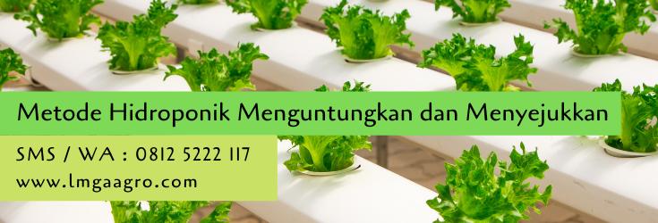 metode hidroponik,hidroponik,budidaya tanaman,pertanian,petani,usaha pertanian,lmga agro