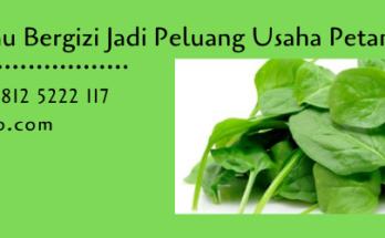sayuran,sayuran hijau,budidaya sayuran,budidaya tanaman,pertanian,lmga agro