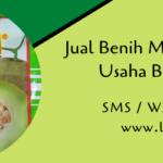 Jual Benih Melon Pertiwi Bantu Usaha Budidaya Petani