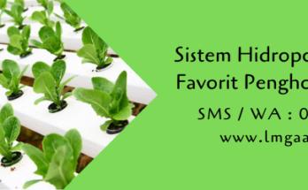 sistem hidroponik,hidroponik,metode hidroponik,budidaya tanaman,pertanian,berkebun,lmga agro