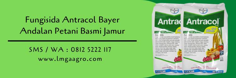 Jual Fungisida Antracol Basmi Jamur Dari Bayer