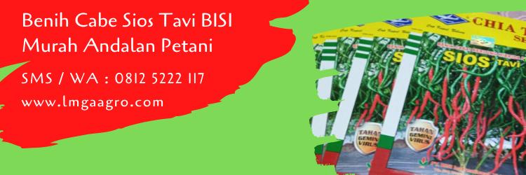 Benih Cabe Sios Tavi BISI Murah Andalan Petani