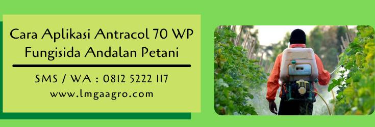 cara aplikasi antracol 70 wp,antracol,fungisida antracol,pestisida,budidaya tanaman,lmga agro