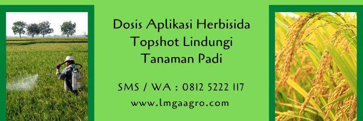 dosis aplikasi herbisida topshot,herbisida topshot,racun rumput,herbisida,pestisida,tanaman padi,lmga agro