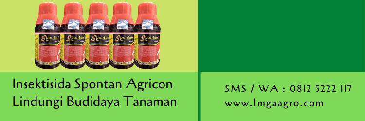 insektisida spontan,insektisida,budidaya tanaman,pertanian,petani,hama tanaman,lmga agro
