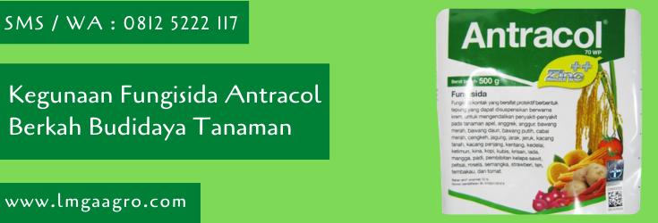 kegunaan fungisida antracol,budidaya tanaman,fungisida antracol,antracol,bayer,bayer indonesia,petani,lmga agro