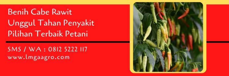 benih cabe rawit unggul tahan penyakit,benih cabe,cabe rawit,budidaya tanaman,budidaya cabe,lmga agro