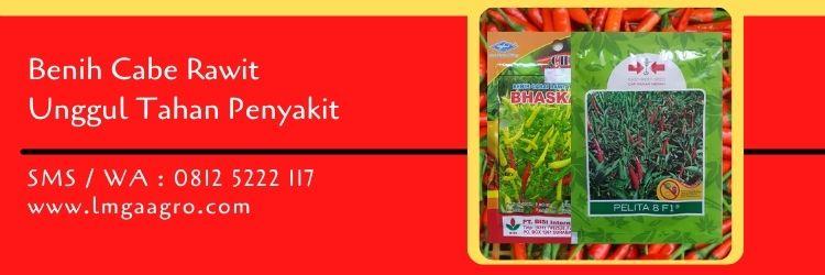 benih cabe rawit unggul tahan penyakit,benih cabe,budidaya cabe,cabe rawit,bibit cabe,lmga agro