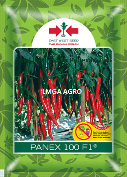 Cabai Panex, Cabe Panex, Jual Cabe Panex Murah, East West Seed, Panah Merah, Lmga Agro