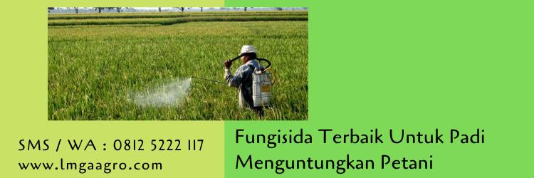 Fungisida Terbaik Untuk Padi Menguntungkan Petani
