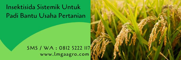 Insektisida Sistemik Untuk Padi Bantu Usaha Pertanian