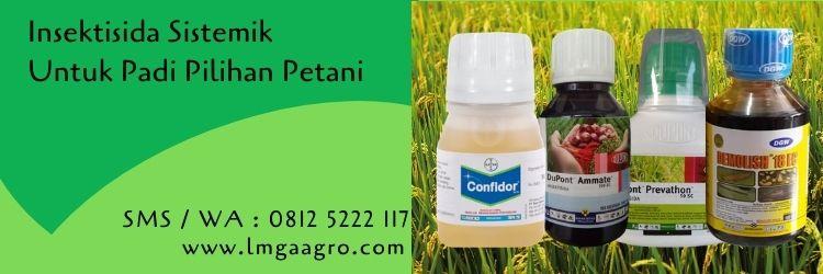 insektisida sistemik untuk padi,insektisida sistemik,tanaman padi,budidaya tanaman padi,petani,lmga agro