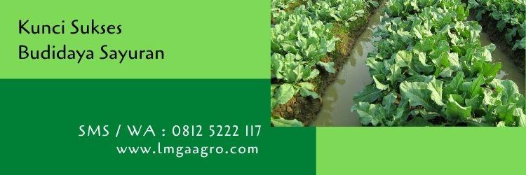 budidaya sayuran,budidaya tanaman,pertanian,bibit sayuran,lmga agro