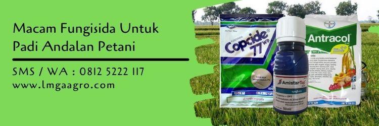 macam fungisida untuk padi,budidaya tanaman padi,tanaman padi,lmga agro