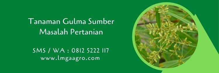 tanaman gulma,hama tanaman,budidaya tanaman,herbisida,lmga agro
