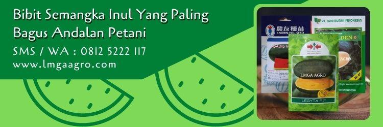 bibit semangka inul yang paling bagus,bibit semangka,benih semangka,budidaya semangka,petani,lmga agro