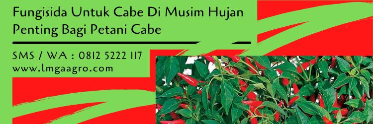 fungisida untuk cabe di musim hujan,fungisida cabe,budidaya cabe,lmga agro