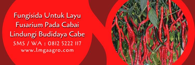 Fungisida Untuk Layu Fusarium Pada Cabai Lindungi Budidaya Cabe