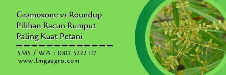 Gramoxone vs Roundup Pilihan Racun Rumput Paling Kuat Petani