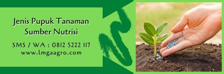 pupuk mkp vs kno3,pupuk tanaman,nutrisi tanaman,budidaya tanaman,pupuk organik,pupuk kimia,lmga agro