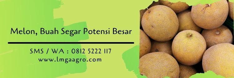 buah melon,daftar nama insektisida sistemik,budidaya melon,lmga agro