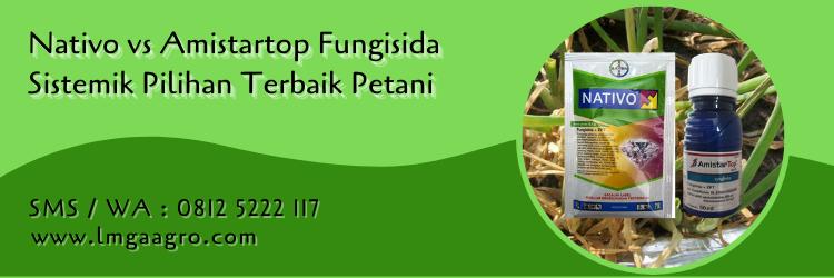 nativo vs amistartop,fungisida,pestisida,petani,budidaya tanaman