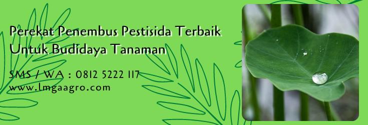 perekat penembus pestisida terbaik,perekat pestisida,budidaya tanaman,pestisida hama,lmga agro