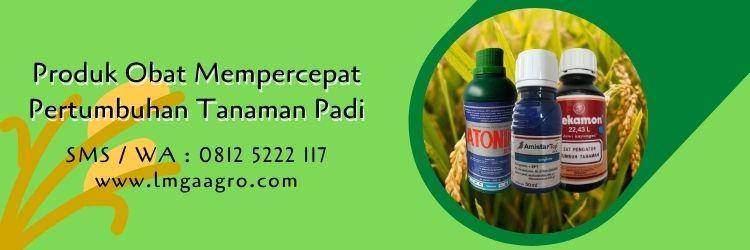 obat mempercepat pertumbuhan tanaman padi,budidaya tanaman padi,budidaya padi,petani,lmga agro