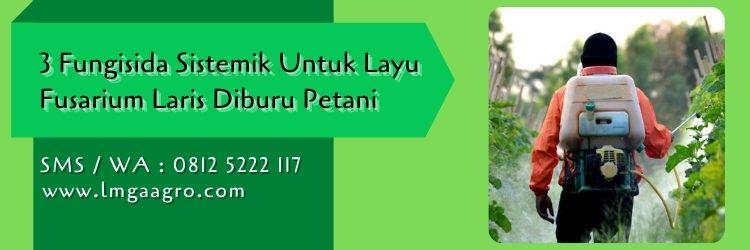 fungisida sistemik untuk layu tanaman,budidaya tanaman,layu fusarium,petani,penyakit tanaman,lmga agro