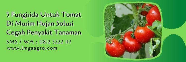 fungisida untuk tomat di musim hujan,budidaya tomat,penyakit tanaman,benih tomat,lmga agro