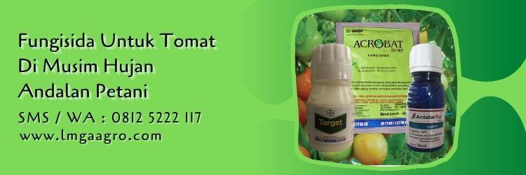 fungisida untuk tomat di musim hujan,petani,budidaya tomat,fungisida,pestisida,lmga agro
