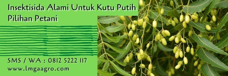 insektisida alami untuk kutu putih,kutu putih,budidaya tanaman,pestisida alami,pestisida organik,lmga agro