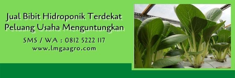 jual bibit hidroponik terdekat,hidroponik,budidaya tanaman,bibit tanaman,lmga agro