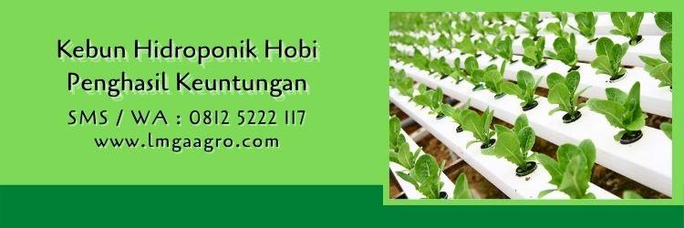 jual bibit hidroponik terdekat,toko pertanian,berkebun,hidroponik,peluang usaha,lmga agro