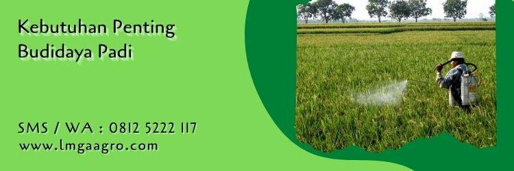 10 fakta tentang tanaman padi,tanaman padi,budidaya padi,budidaya tanaman,petani,lmga agro