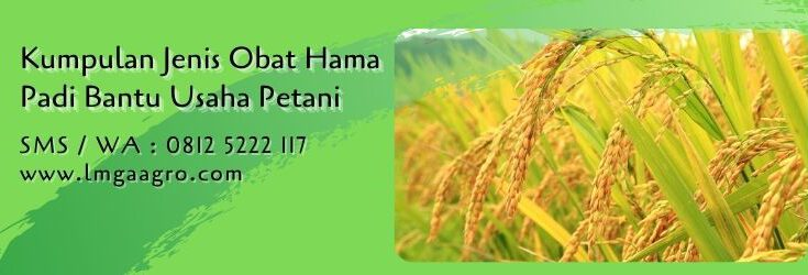 kumpulan jenis obat hama padi,budidaya padi,tanaman padi,pestisida padi,lmga agro