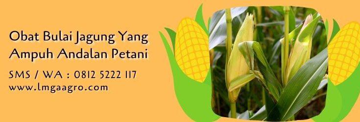 obat bulai jagung yang ampuh,budidaya jagung,benih jagung,petani,lmga agro