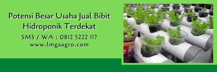 jual bibit hidroponik terdekat,toko pertanian,budidaya tanaman,peluang usaha,hidroponik,lmga agro