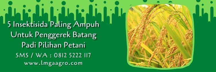 insektisida paling ampuh untuk penggerek batang padi,tanaman padi,budidaya padi,petani,hama tanaman,lmga agro