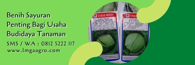 jual bibit sayuran terdekat,budidaya tanaman,budidaya sayuran,benih sayuran,lmga agro