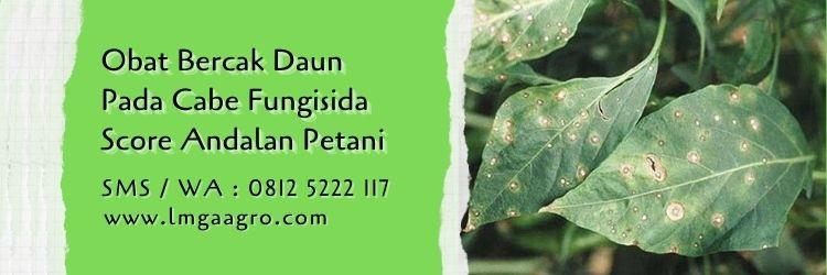 obat bercak daun pada cabe,budidaya cabe,tanaman cabe,fungisida score,fungisida,lmga agro