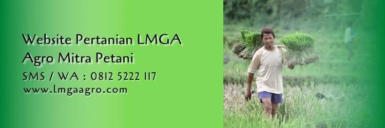 website pertanian lmga agro,petani,pertanian,usaha tani,budidaya tanaman,website pertanian,lmga agro