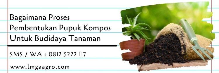 bagaimana proses pembentukan pupuk kompos,budidaya tanaman,pertanian,pupuk tanaman,pupuk,lmga agro