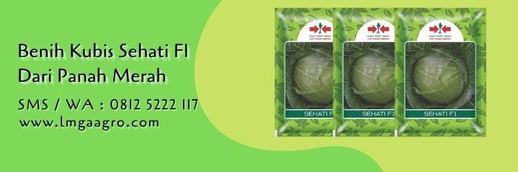 benih kubis sehati f1,budidaya kubis,benih kubis,sayur kol,panah merah,lmga agro