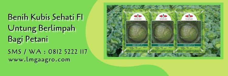 benih kubis sehati F1,kubis,benih kubis,petani,sayuran hijau.sayuran,lmga agro